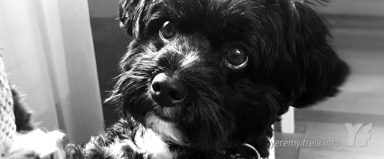 Lucky Frei Hund